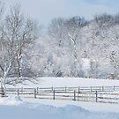 Snow Struck Trees by Jennifer P. Zduniak