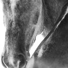 Smedley Horse by Jennifer P. Zduniak