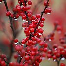 Red Berries with Spring Rain by Jennifer P. Zduniak