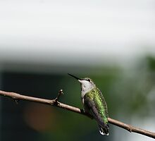 Break Time for the Hummingbird by Richard Williams