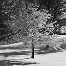 Winter Tree down street by Jennifer P. Zduniak