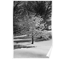 Winter Tree down street Poster