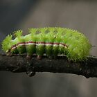 Marching Band Caterpillar by skyoncloud9