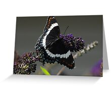 White Admiral Greeting Card