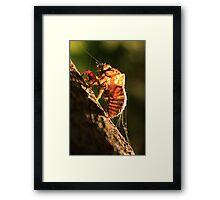 Shell Of A Cicada Framed Print