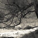 Tree Branch in Mono by pennyswork