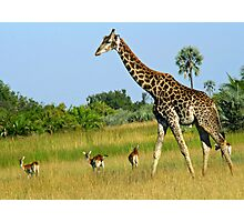 The Delta-giraffe and red lechwe Photographic Print
