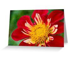 Cheerful dahlia Greeting Card