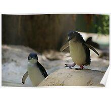 The littlest penguin Poster