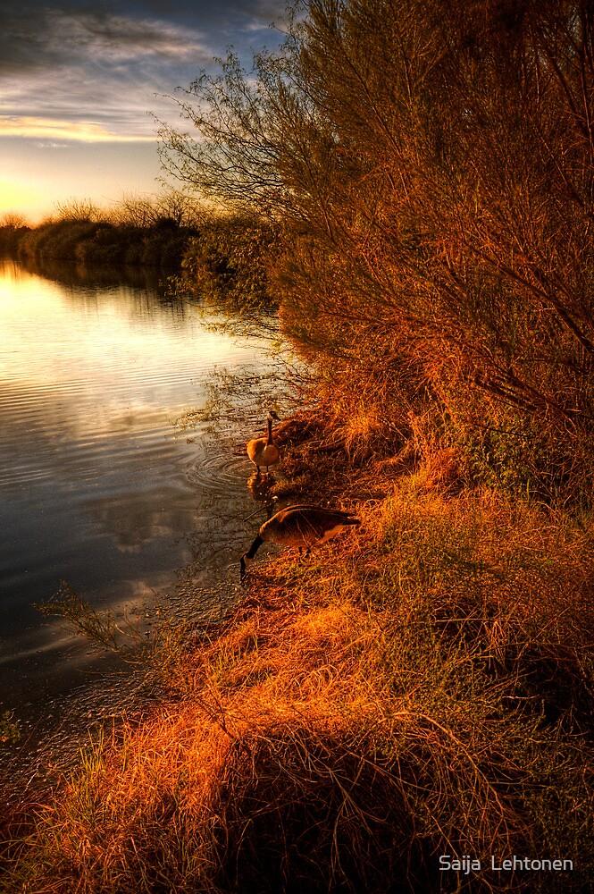 By The Evening's Golden Glow by Saija  Lehtonen