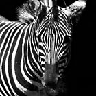 Striped BW by Colureful
