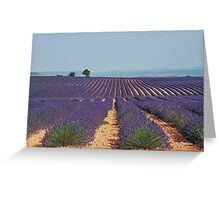 Lavender fields - Haute Provence Greeting Card