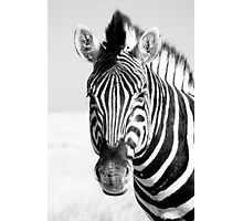 Zebra at Etosha  Photographic Print