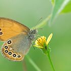 butterfly on the flower in Autumn by davvi