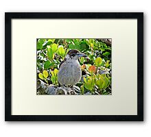 ~ Sing Me a Song ~ Framed Print