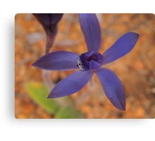 early blue fairy orchid,Pheladenia deformis Canvas Print