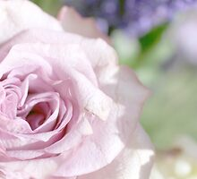 Perfumed Rose by Circe Lucas