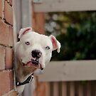 Peek-a-Boo! by Zdogs