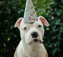 Happy Birthday Mum!  by Zdogs