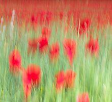 Poppy Field by Adam Webb
