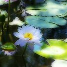 Water Lily Orton effect by Matthew Walmsley-Sims