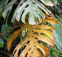 Fading palm leaves by DeborahDinah