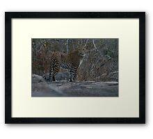 Leopard - Yala, Sri Lanka Framed Print