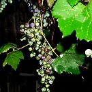 grapes of wrath2 by andytechie