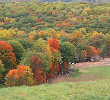 Autumn Slopes by Sharon-Leigh Ricker
