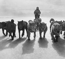 Huskies pulling sledge by madewithslnsw
