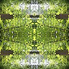 Kaleidoscope - Tree Series Canopy by Circe Lucas