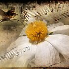 Song of a Dream by Rozalia Toth
