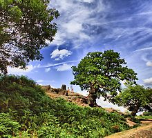 Hdr Bradgate Park - Summer 2011 by Mark Johnson