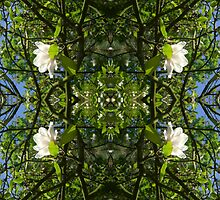 Kaleidoscope - Tree Series Magnolia by Circe Lucas