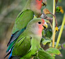 Lovebird Couple  by Saija  Lehtonen