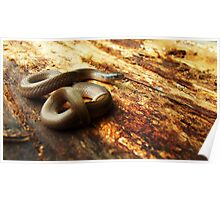 Western Smooth Earthsnake 2 Poster