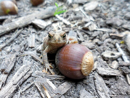 Toad Posing Against Acorn by Barberelli