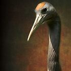 Noble and immortal - the Japanese Crane by steppeland