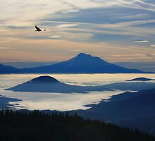 Mount Shasta Morning with Raven by Larry Turner