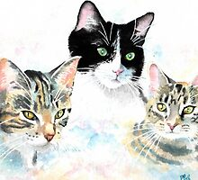 Three Cats - a Portrait by JoMather