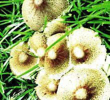 Shroom Flowers by sophia071