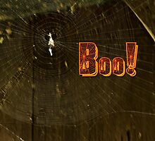 Halloween Greeting Card - Spider Web and BOO by MotherNature