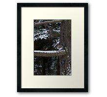 Winter Breakfast Framed Print