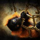 Lazy Lemur  by Marcia Rubin