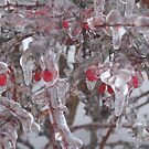 Frozen Berries by cishvilli
