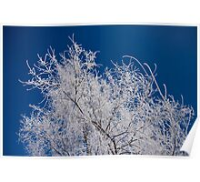 Cotton Frost Poster