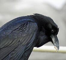 Hunched Blue Mesa Raven by DWMMPhotography