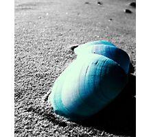 Step Shells Photographic Print