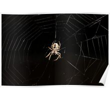 Spider on a web Poster