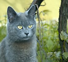 Gray cat outdoors by qiiip